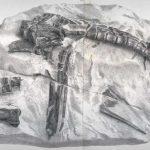 Hypilophodon