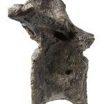 Neovenator vertebra