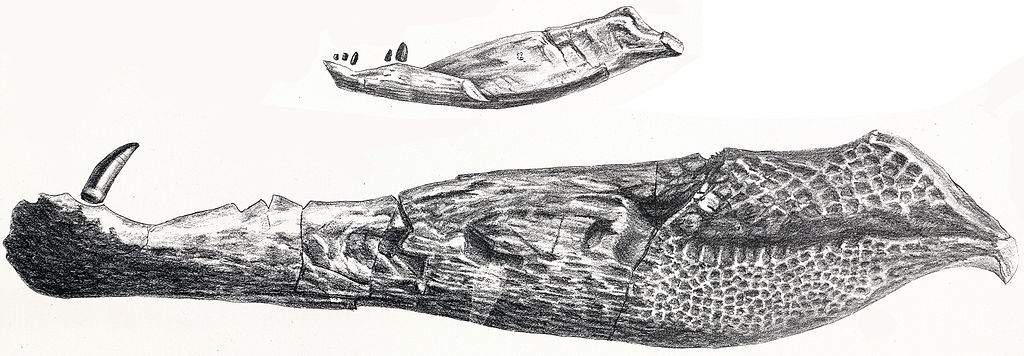 Oweniasuchus
