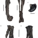 Valdosaurus leg bones
