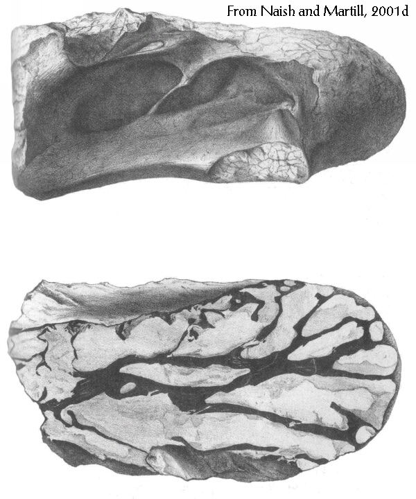 Chondrosteosaurus vertebra