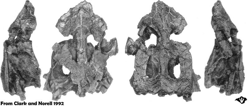 Hylaeochampsa skull