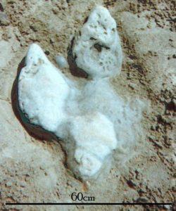 'Iguanodon' footcast