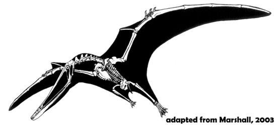 Istiodactylus skeleton