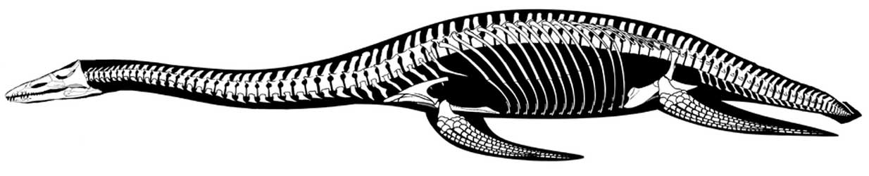 reconstructed leptocleidid