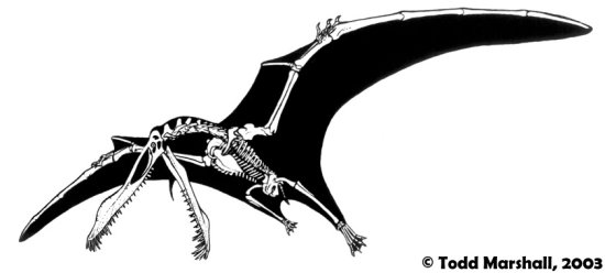 ornithocheirid-skeletal