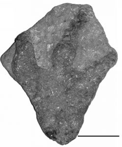 Footprint from the Vectis Formation