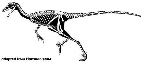 Troodontid skeleton, similar to how Yaverlandia may have appeared