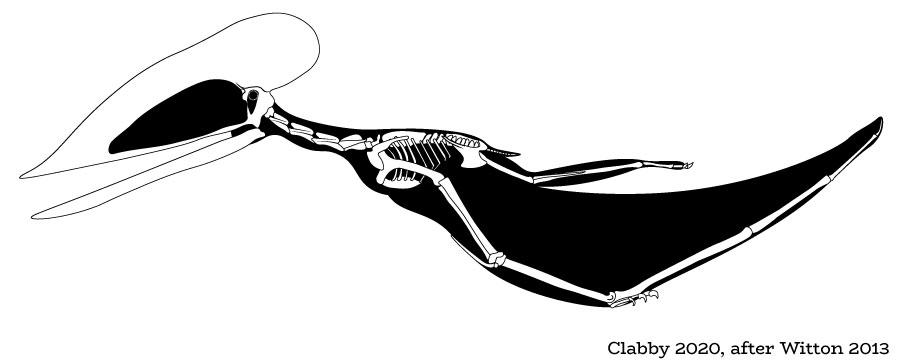 Wightia - speculative skeletal reconstruction